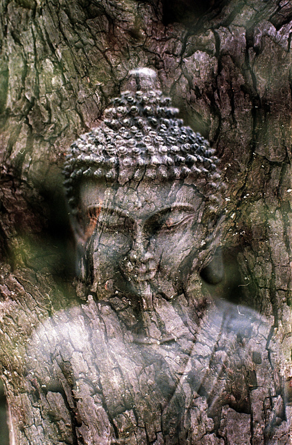 buddha by Benjamin Balazs from Pixabay